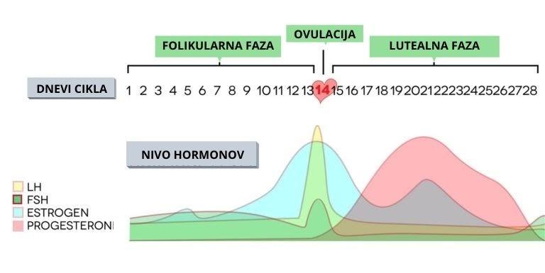 menstrualni cikel faze